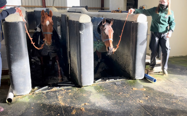 Coming out of the Equine Spa